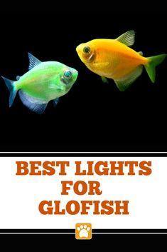 Best GloFish Lights (Buying Guide) #thepetsupplyguy #pet #pets #animal #fish #Animal #Buying #fish #GloFish #guide #lights #Pet