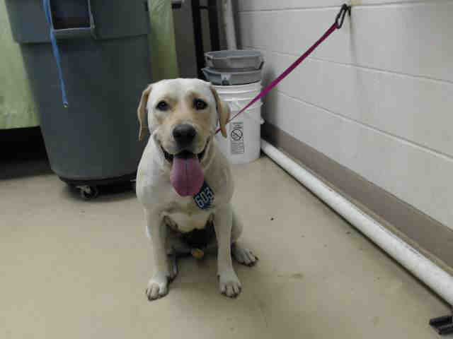Dies June 12 2017 Needs An Adoption Hold By 5 30pm Or A Rescue Group To Claim By 5 50pm Monday 6 12 Local Foster Needed Dog Id Animal Help Dog Adoption