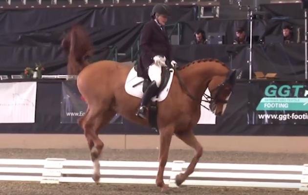 Pin On Equestrian News