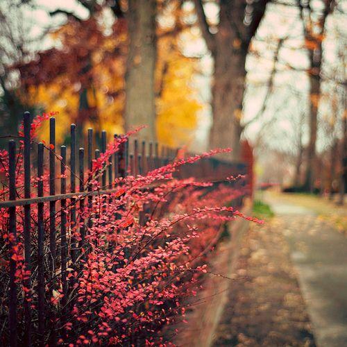 Autumn · Autumn Gif Tumblr ...