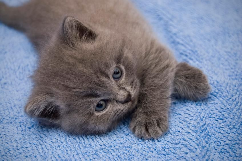 50 Unique Names For Gray Cats And Kittens Lovetoknow Grey Kitten Grey Cat Names Grey Kitten Names