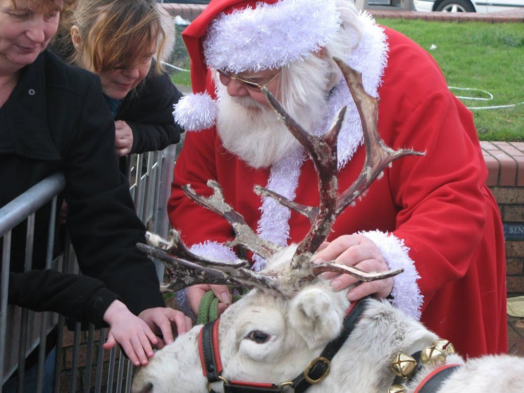 Animal Farm – Reindeer & Sleigh Hire | Derbyshire| East