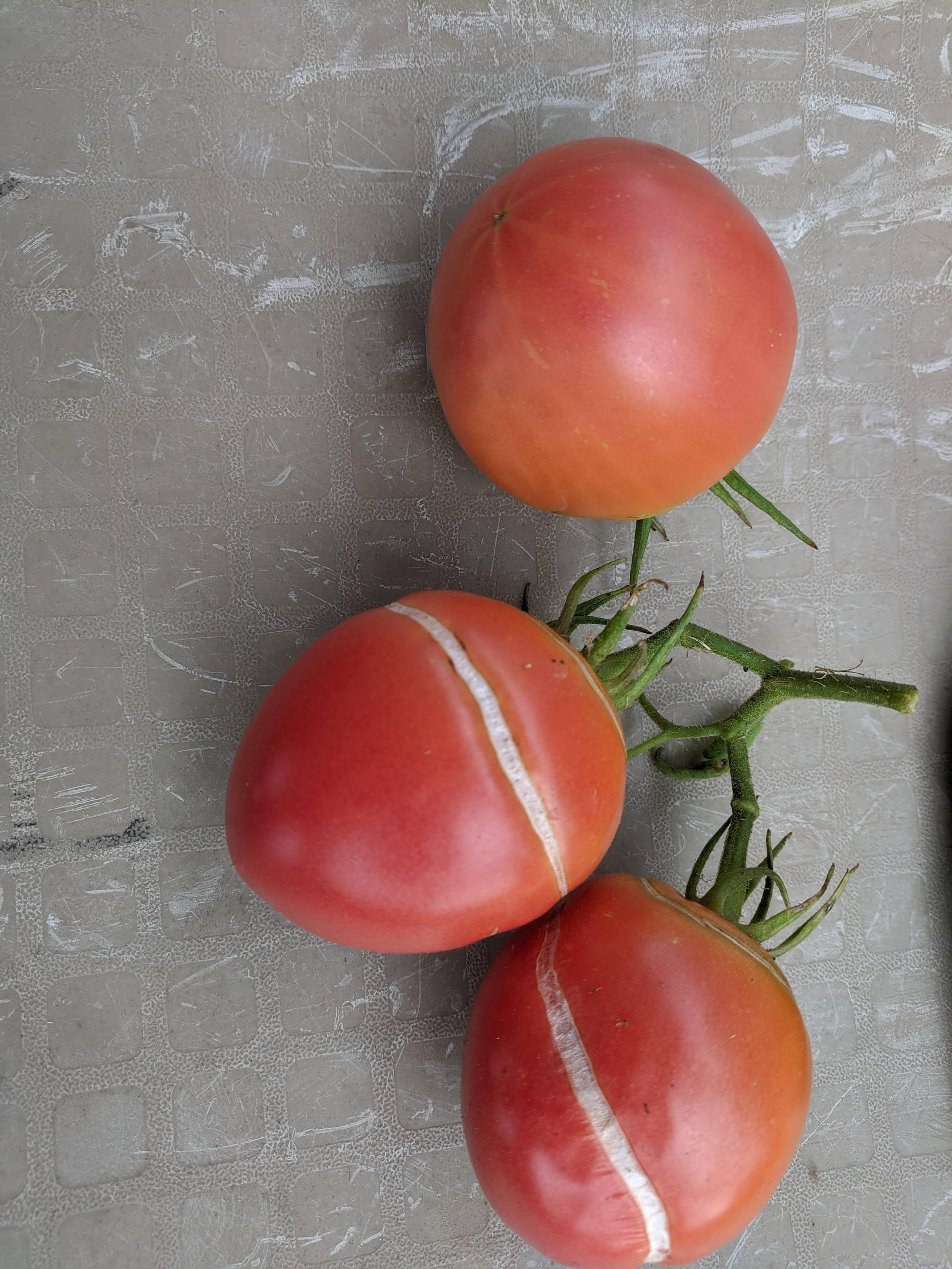 anyone tell me what's going on with my tomato's?Can anyone tell me what's going on with my tomato's?