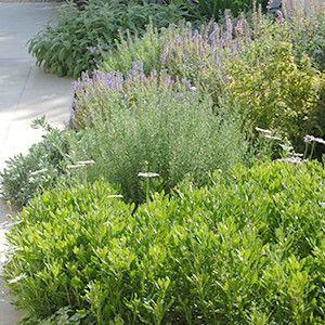 Les plantes de soleil | Plantes de soleil, Paysage ...