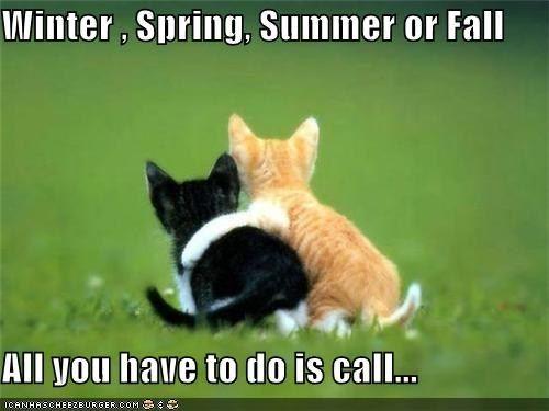 Carole King Cat Hug Cat Love Kittens Cutest