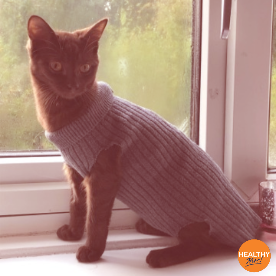 We Re In Love With This Stylish Alternative Option To Using A Cone After A Routine Spaying Operation Did Your P Healthy Pets Cat Insurance Dog Insurance