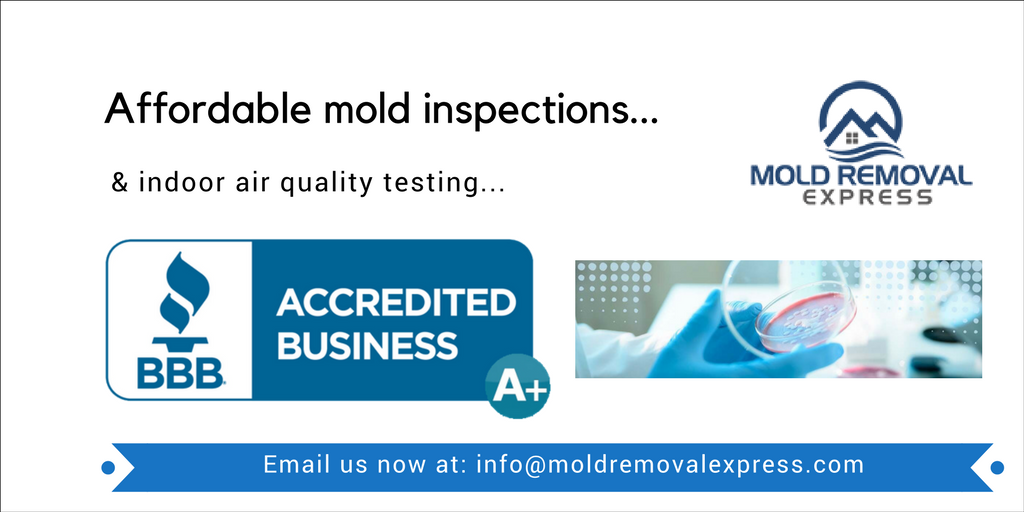 Request Your Quote Mold inspection, Be yourself quotes