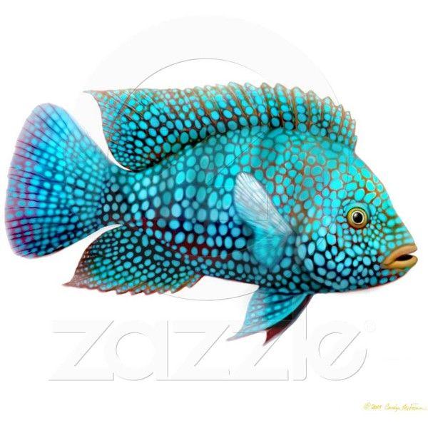 Carpintis Texas Cichlid Fish Ornament Photo Cutout from Zazzle.com found on Polyvore