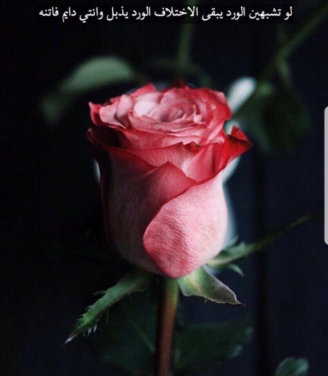 Pin By أبو محمد On جمال الورد Flowers Plants Rose