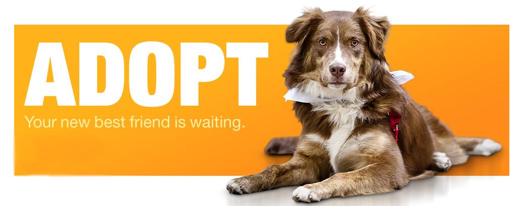National Adopt A Shelter Pet Day; April 30 Pet adoption