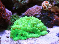 Featured Aquariums Monthly Featured Nano Reef Aquarium Profiles Coral Reef Aquarium Reef Aquarium Ocean Fishing