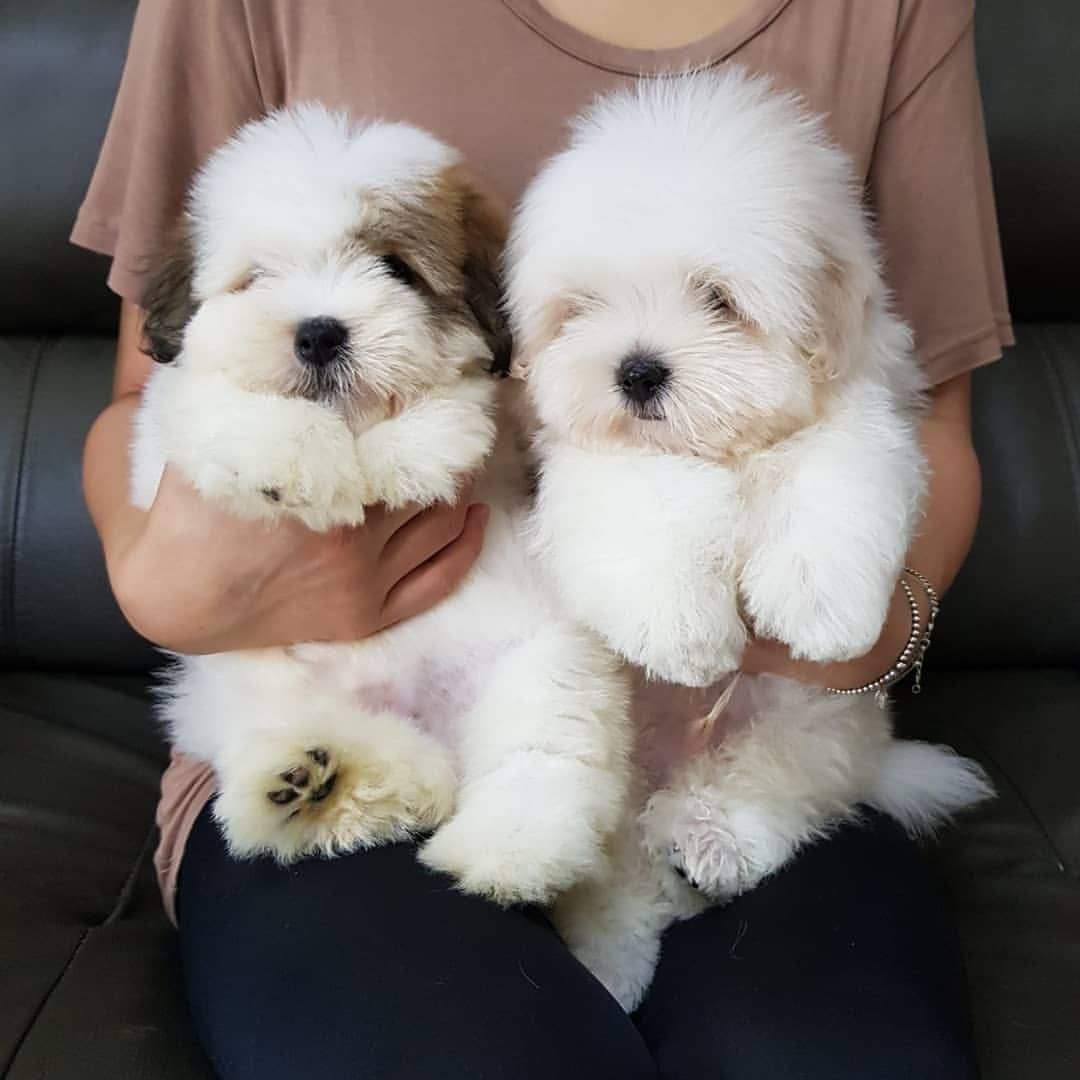 Cute Puppies By Susan Cramer On Furry Mostly Dog Friends Cute