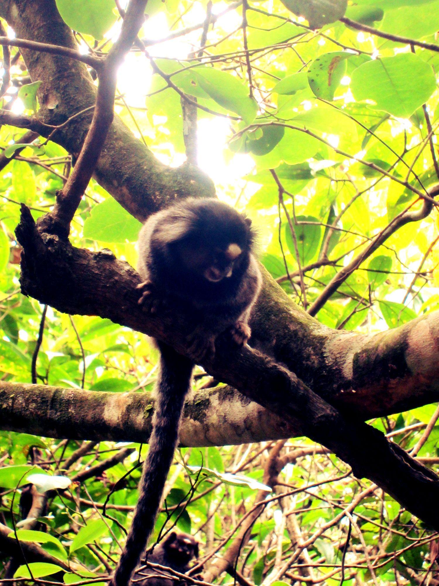 36++ Monkey around game australia collection