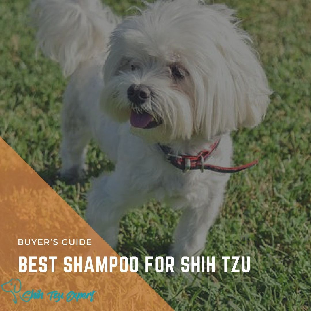 Best Shampoo For Shih Tzu 2019 Buyer S Guide Best Shampoos
