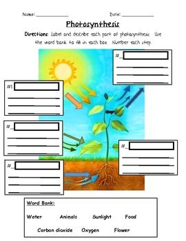 Photosynthesis 3rd grade photosynthesis school and life science photosynthesis 3rd grade ccuart Gallery