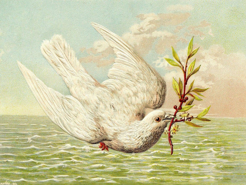 Поздравление, открытки 8 марта птицы
