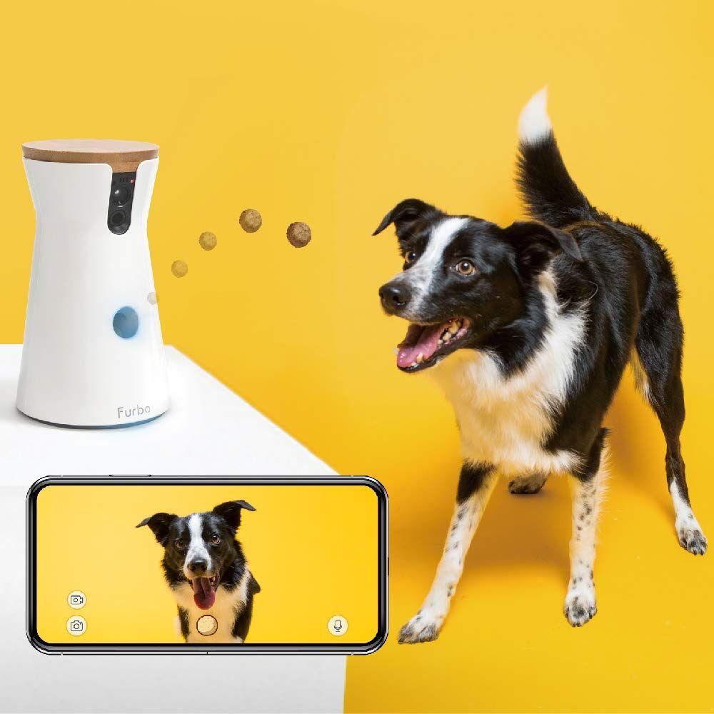 S Up Lil Doggie Pet Camera Pets Your Pet