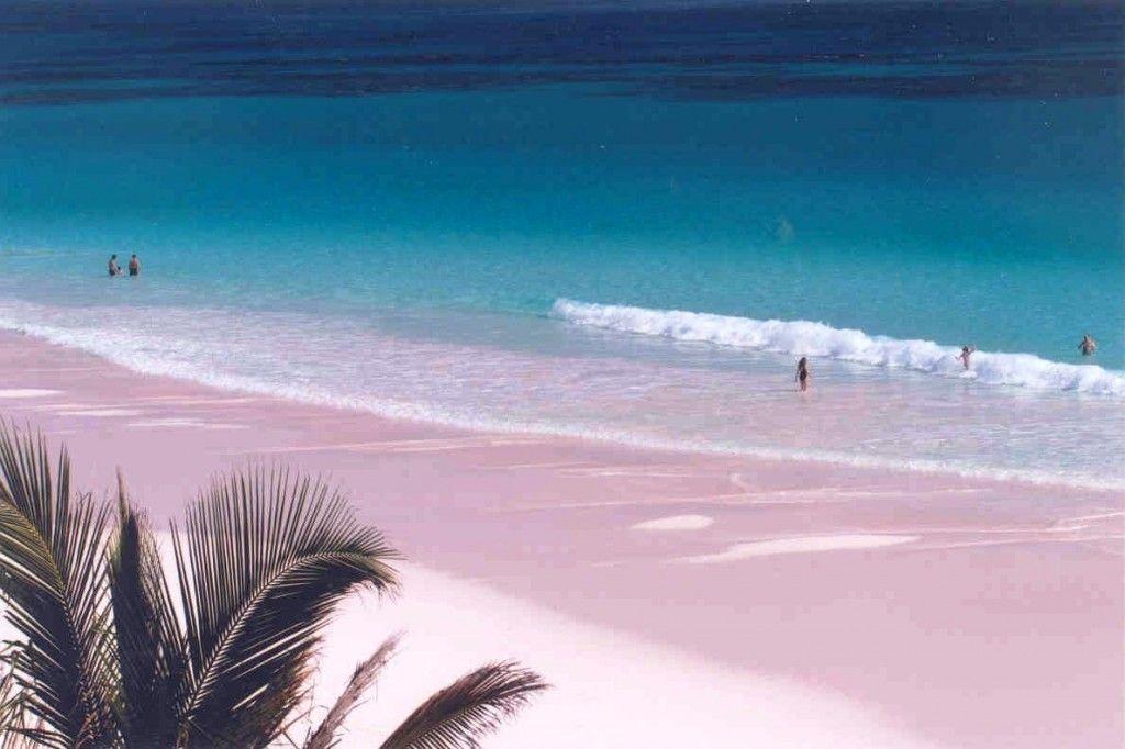 Pink Beach Of Harbor Island Bahamas Beaches In The World Pink Sand Beach Harbour Island Bahamas
