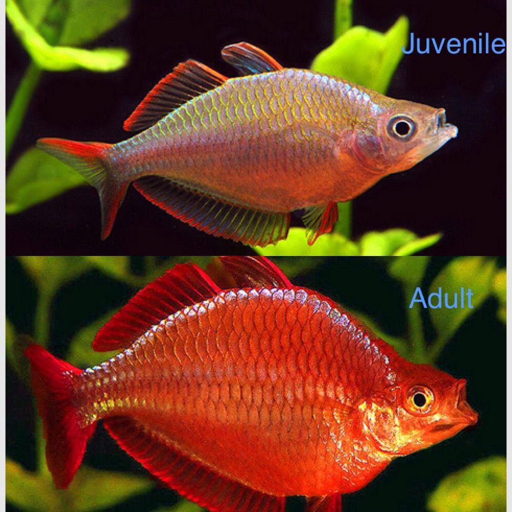 Freshwater fish hobby - Fish