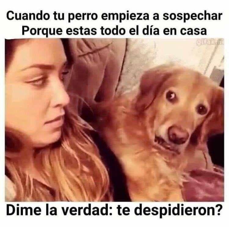 Cuandp Tu Perro Ya Empieza A Sospechar Memes Divertidos Sobre Perros Humor De Perros Perros Divertidos