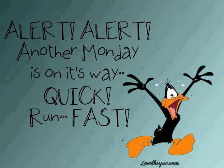 Alert Funny Cute Funny Quotes Looney Tunes Daffy Duck Monday Funny Quotes Monday Quotes Over It Quotes