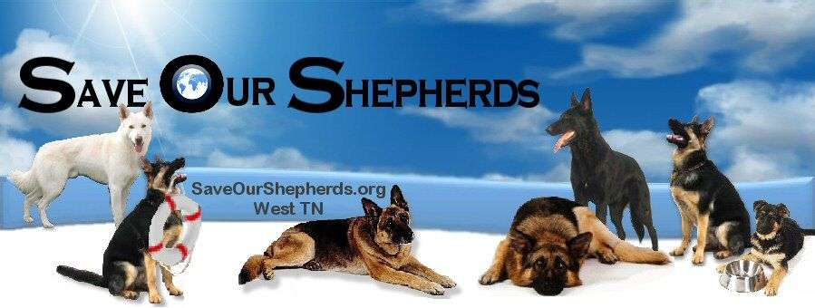 Save Our Shepherds Dog Rescue Groups Dog Branding German