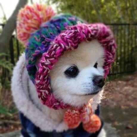Soooo cute | Dogs | Pinterest