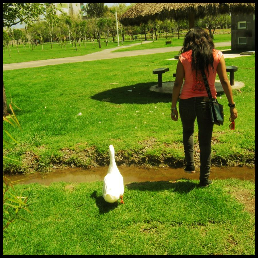 Walking with a Duck