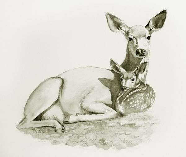 find this pin and more on fawn sketches by ellenbounds92