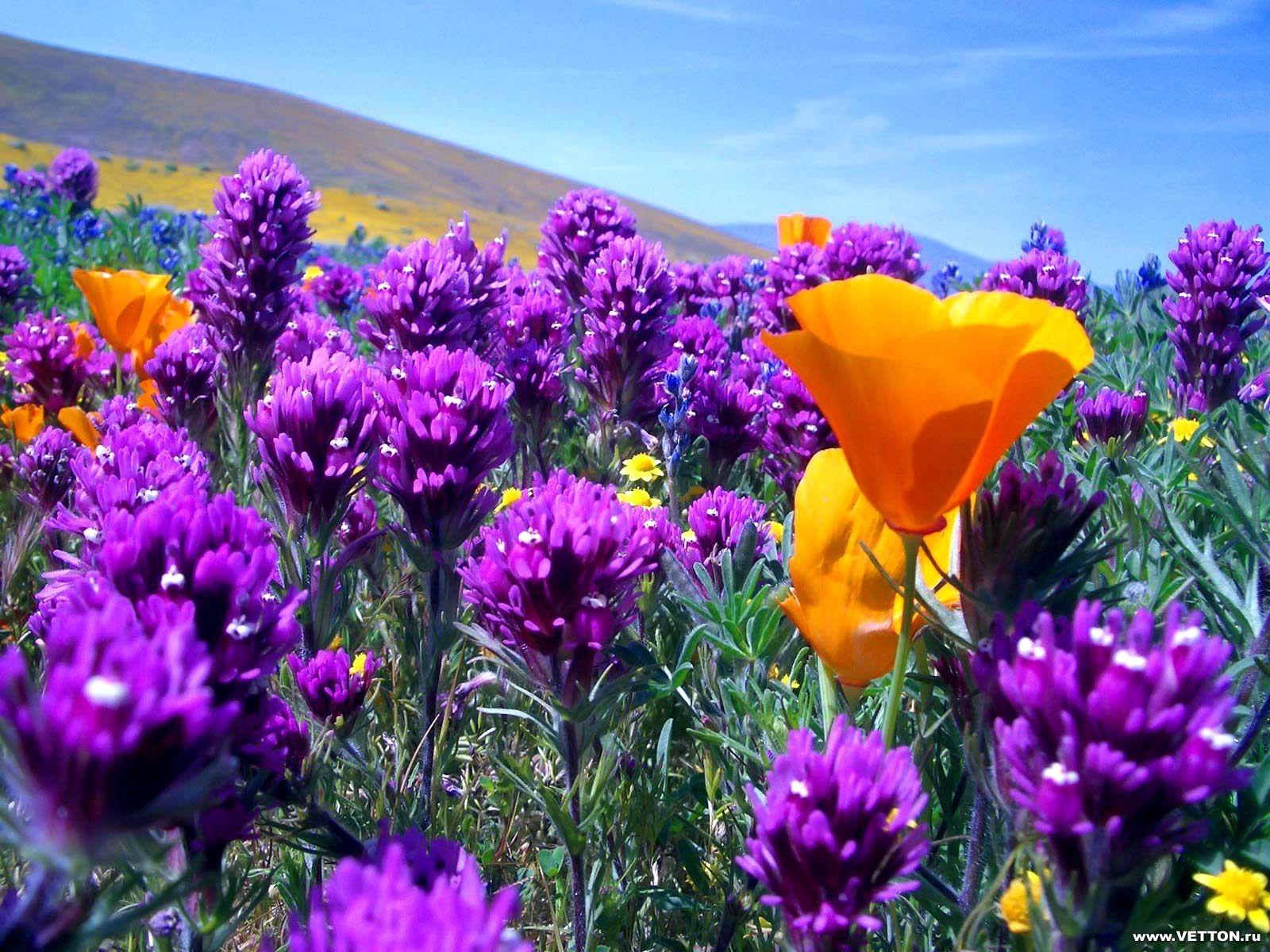 Beautiful Flowers Beautiful Flowers In The World Wallpapers Hd