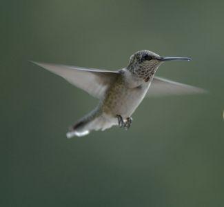 dd2d6fddcba04d0d3ca4eb7d2756c183 instructions on how to make a hummingbird house hummingbird,How To Make A Hummingbird House Plans