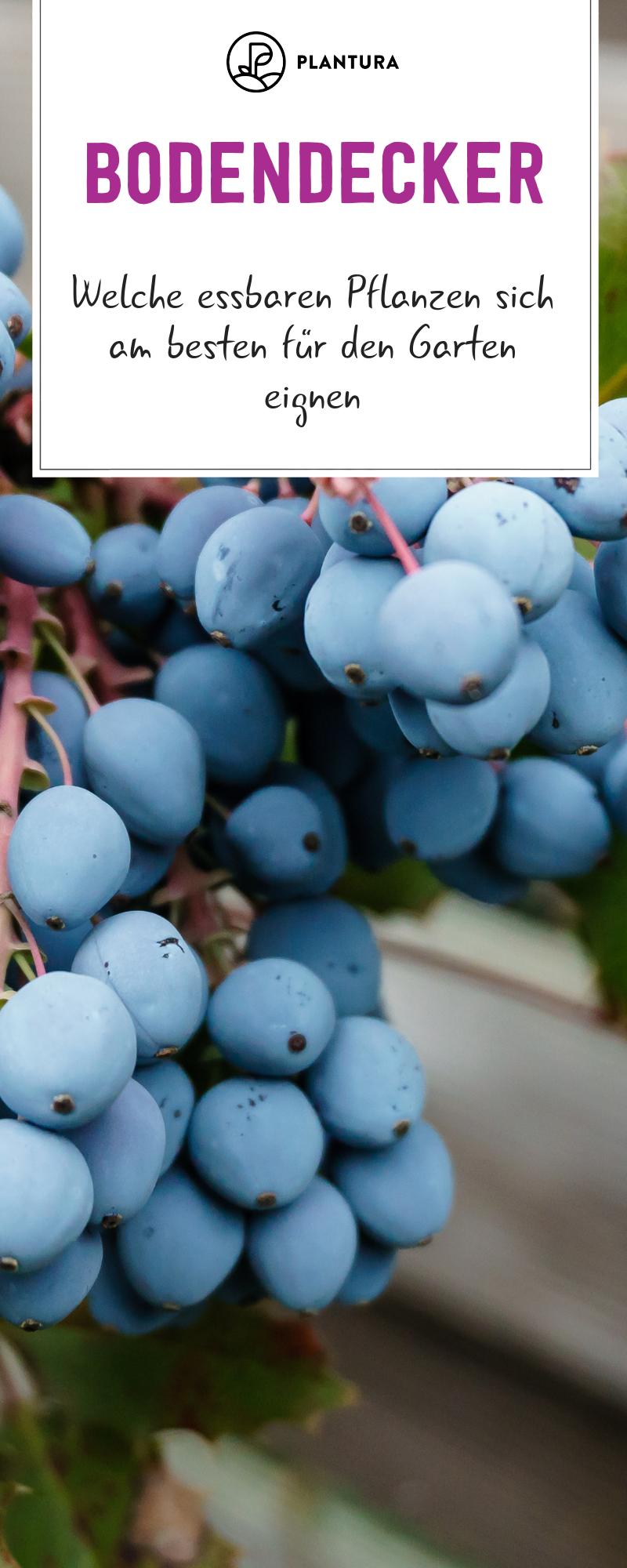 Essbare Bodendecker: Die Top 10 für Ihren Garten #kräutergartenpalette