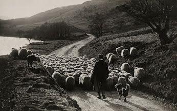 William Reed Scotland, 1919