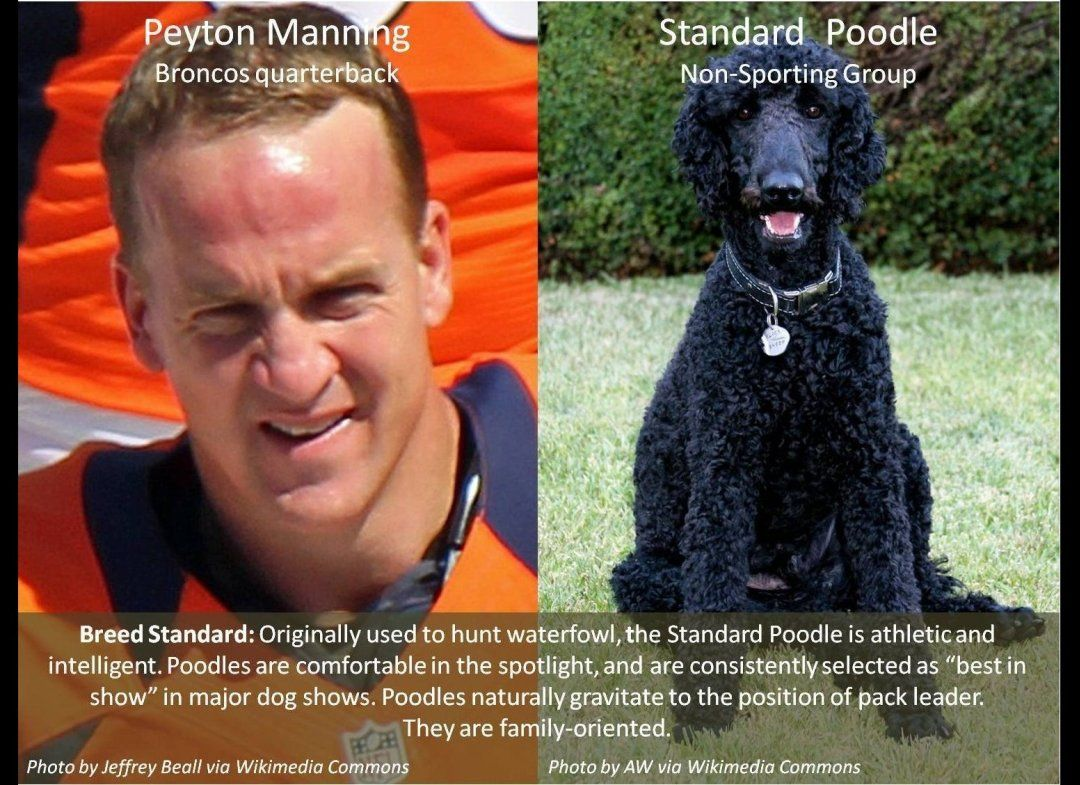If Super Bowl Players Were Dogs (PHOTOS) | Janet Harris