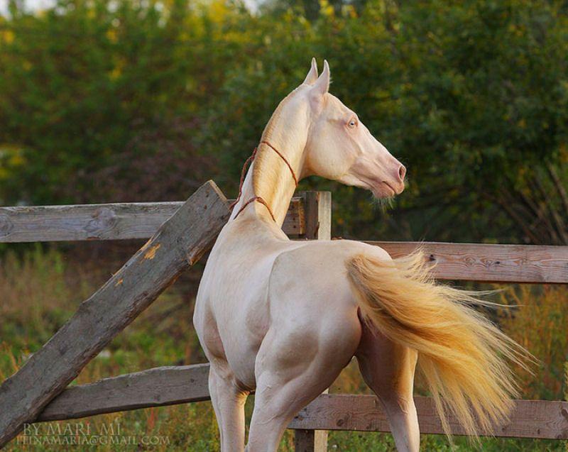 Muitos Acham Que Esta Criatura Rara E O Cavalo Mais Bonito Do