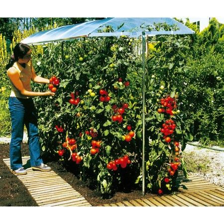 culture de tomates en pot et toit en alluminium pour effet serre potager a venir pinterest. Black Bedroom Furniture Sets. Home Design Ideas