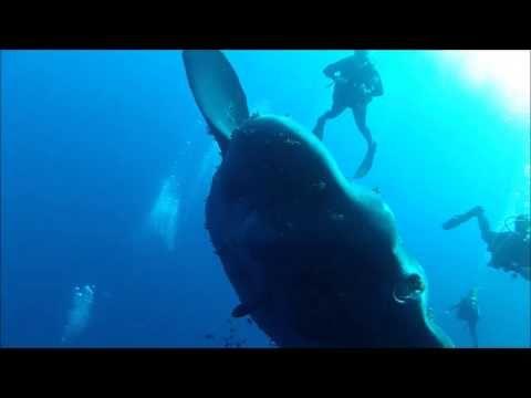 Unieke video: Immense maanvis gespot bij Malta - Nieuws - Droomplekken