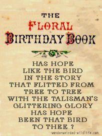 Snowdrop Poems February Birth Flower By Month Wonderweirded Wildlife Com Free Printable Flow Flower Birthday Cards February Birth Flowers Birth Month Flowers