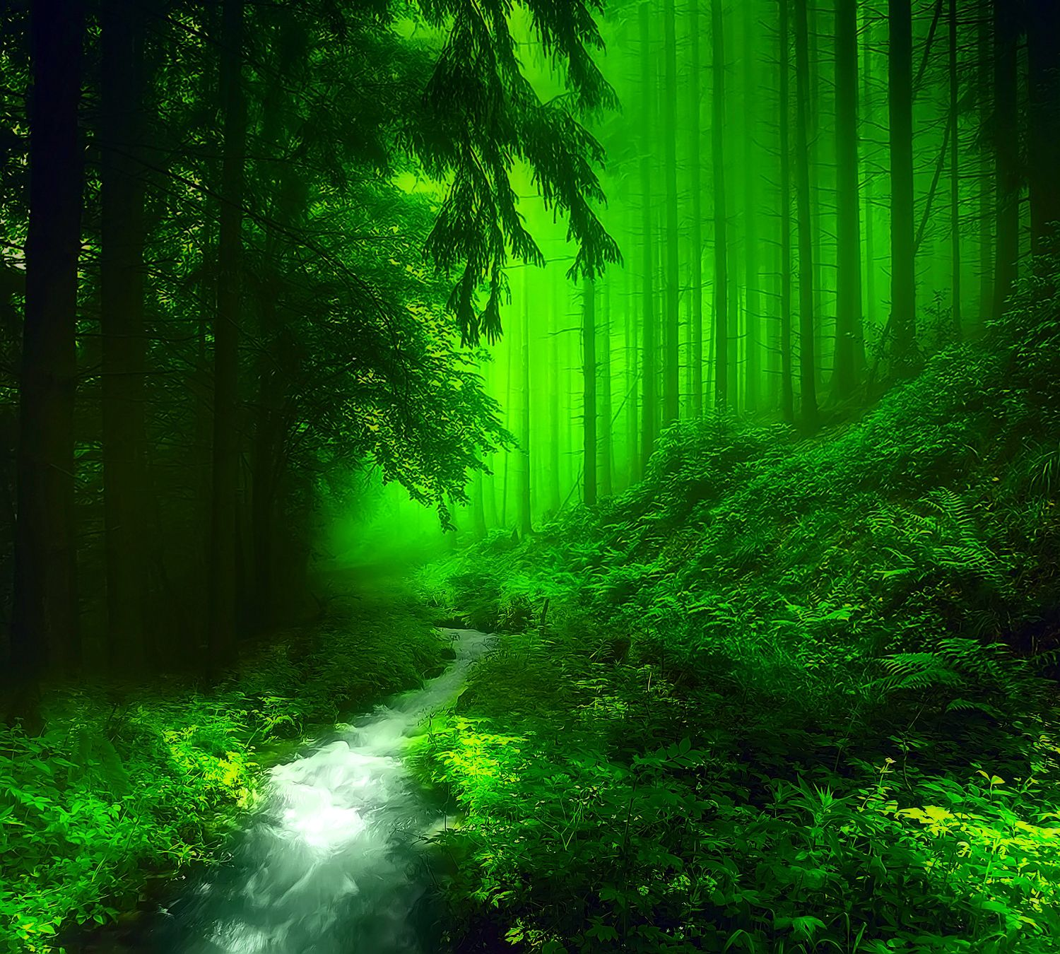 Green Forest Wallpaper HD Resolution #f07ai1oe