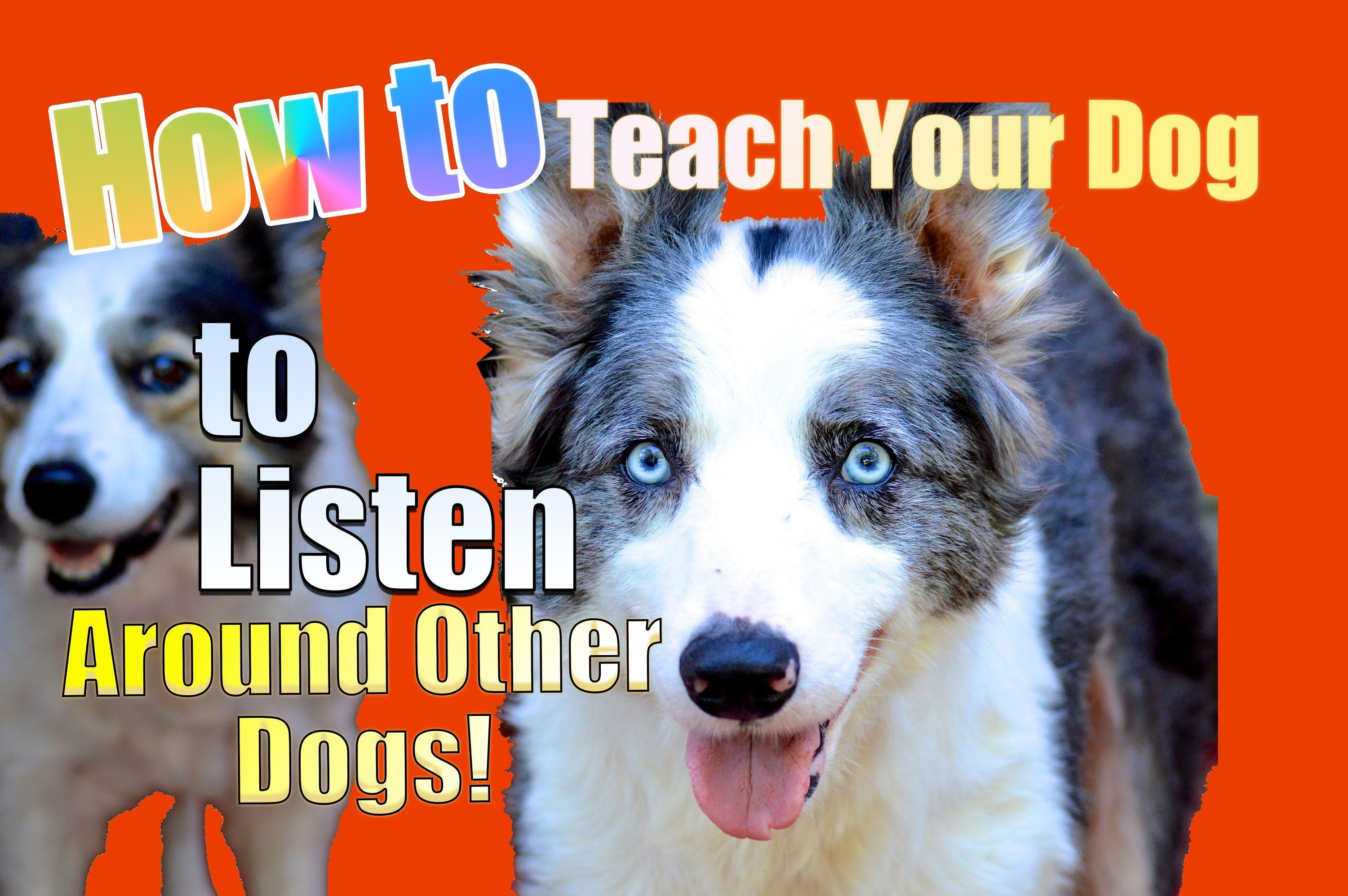 How To Teach Your Dog To Listen To You Around Other Dogs Puppy