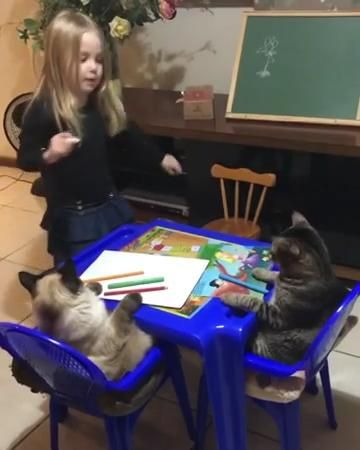 Stay home and bring students attention.hhh #video #love #cats #funny #funnyanimal #cat #lovers #caturday  Follow us on Facebook :