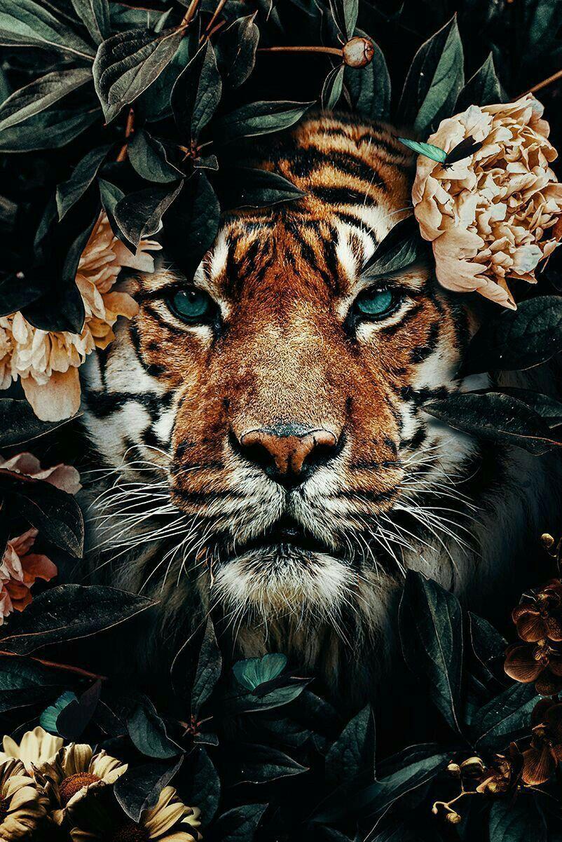 Pin Auf Tiger Tatowierung