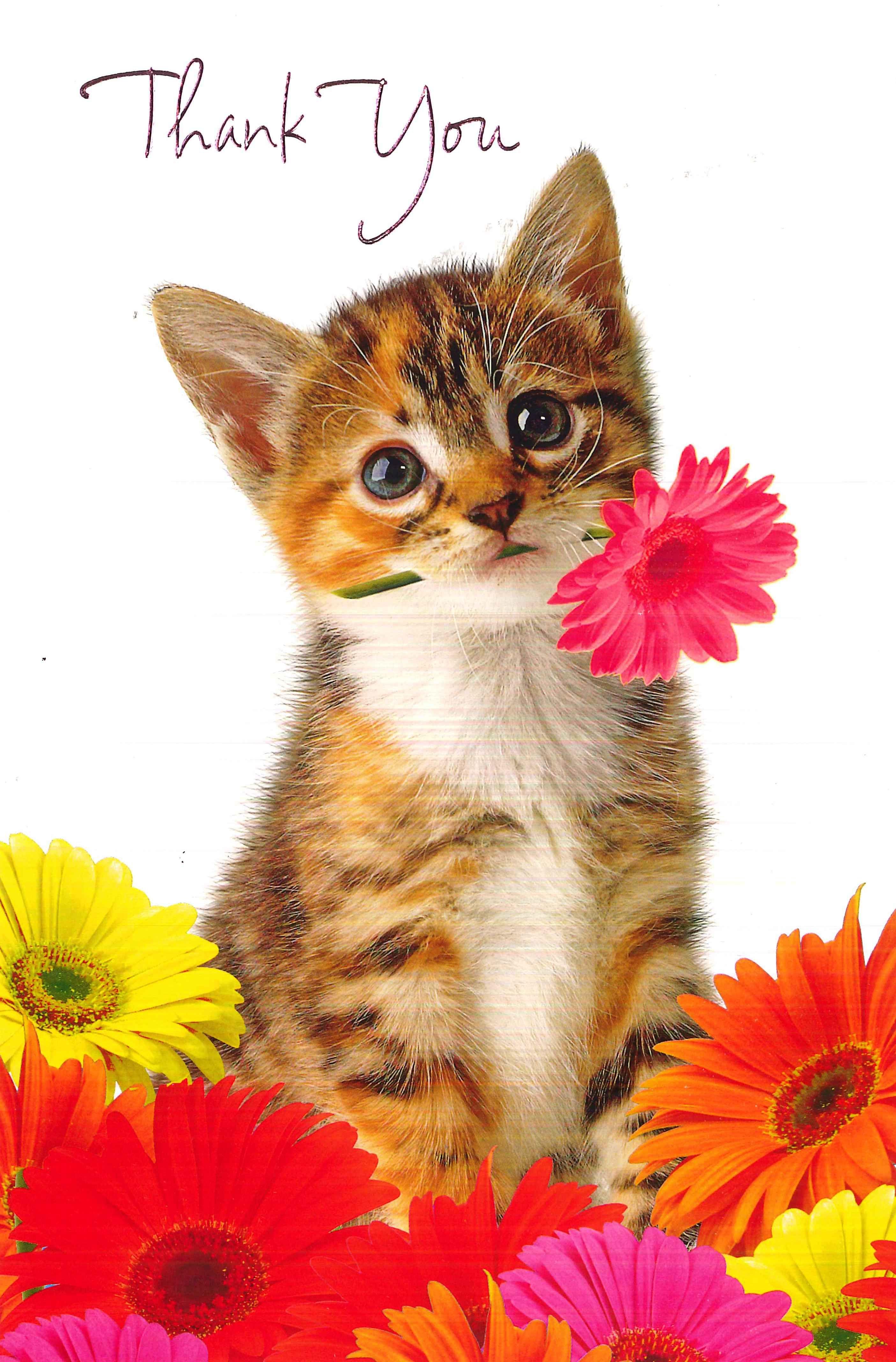 Открытки кошки спасибо