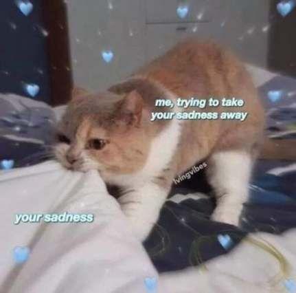 Memes Friends Wholesome 19 Best Ideas Memes Funny Cat Memes