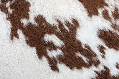 Brown Cowhide Wall Mural Brown Aesthetic Cow Print Wallpaper Western Wall Art