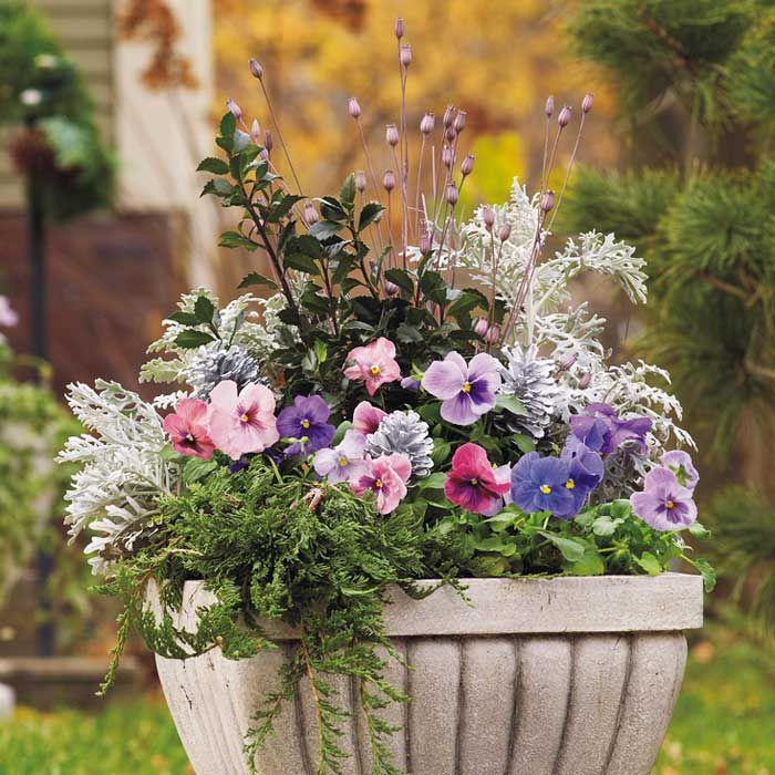 (Winter) Flower Planter Pots   Container Gardening