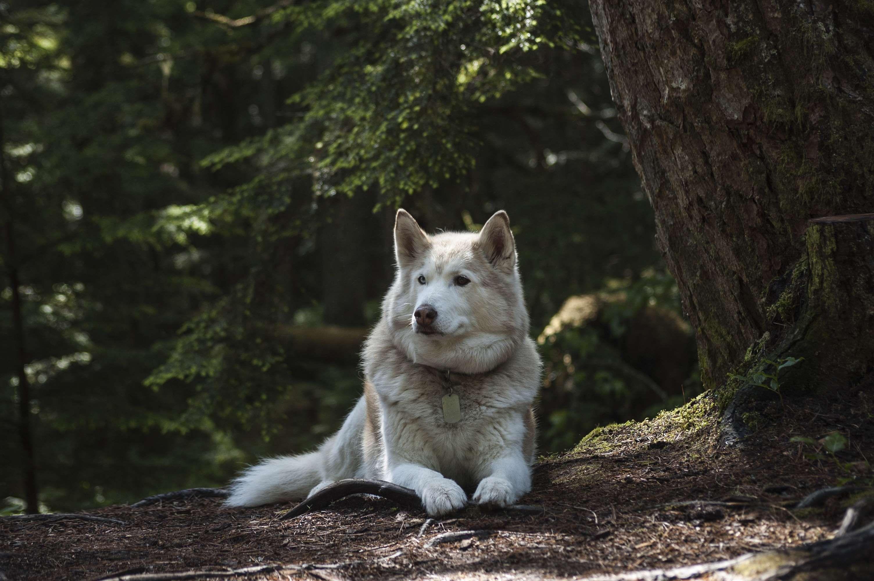 Great Fur Brown Adorable Dog - dd31cff3e6f785e20a41bbb8dcb2ea94  Trends_551494  .jpg