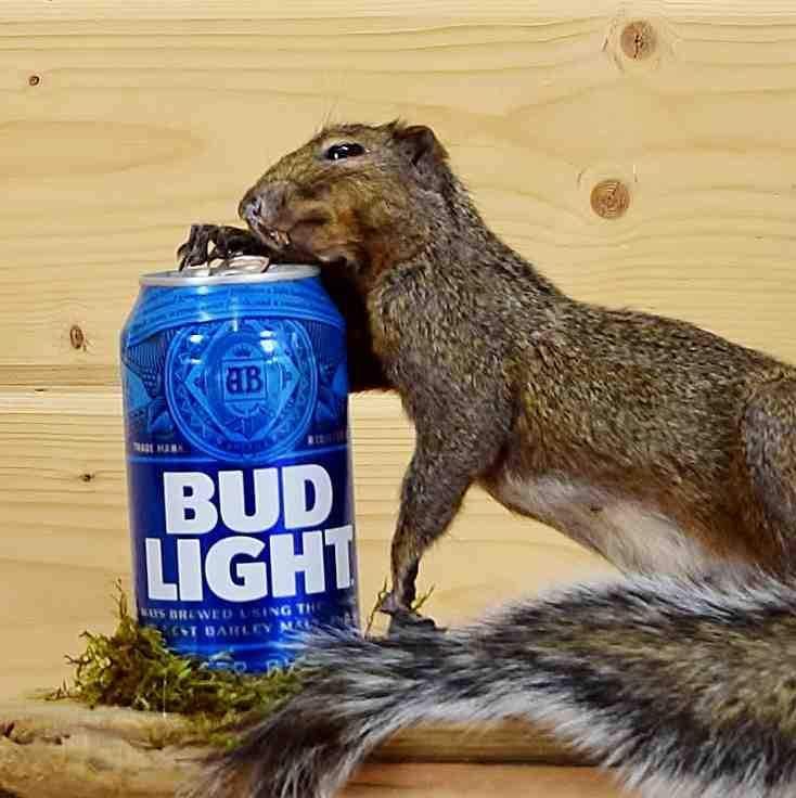 Drunken Squirrel Taxidermy Mount - SW4954   Pinterest