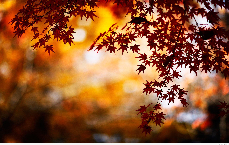 autumn wallpaper hd wallpapers pinterest fall wallpaper