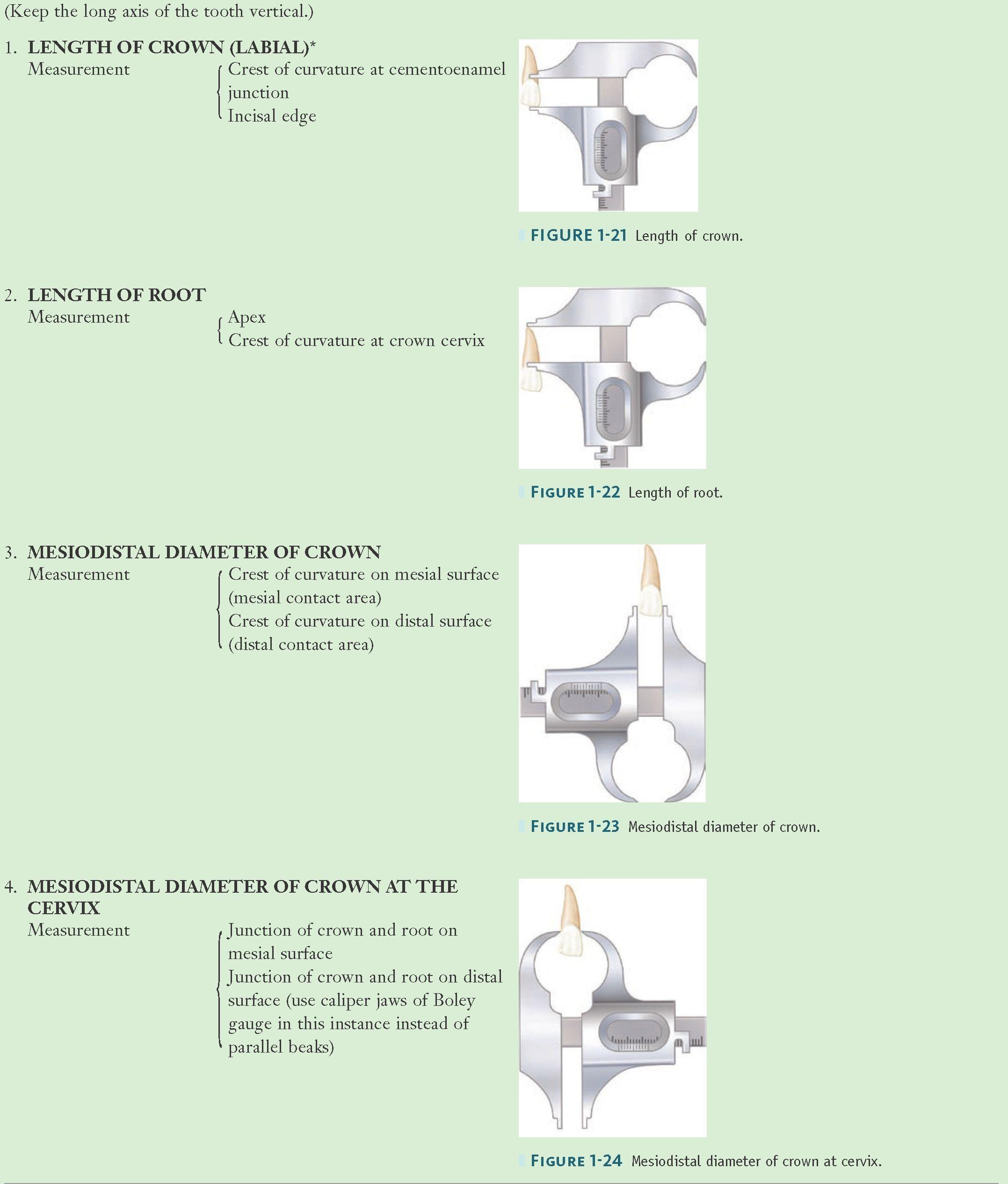 Method of Measuring an Anterior Tooth—cont\'d | encia | Pinterest